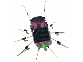 Insecto Solar